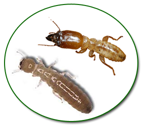 Termites Control and Inspection